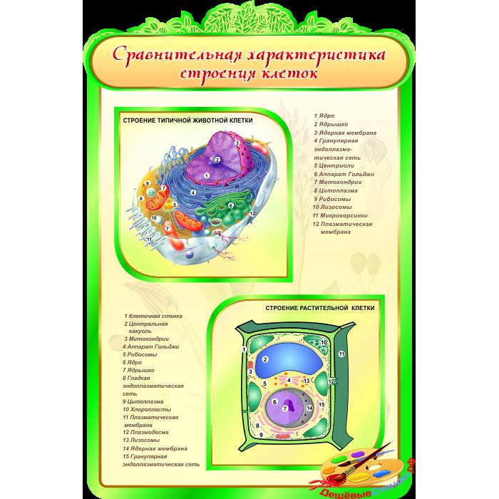 Сравнительная характеристика строения клеток для кабинета Биологии в зеленых тонах