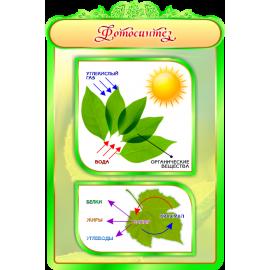 Стенд Фотосинтез для кабинета Биологии в зеленых тонах