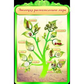 Стенд Эволюция растительного мира для кабинета Биологии в зеленых тонах