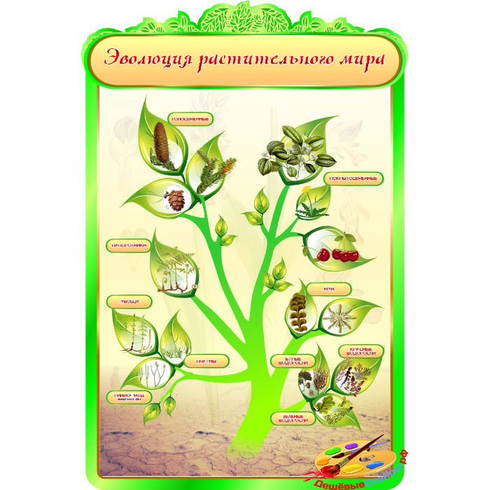 Эволюция растительного мира для кабинета Биологии в зеленых тонах