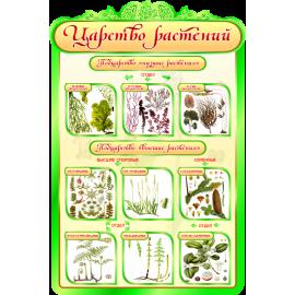 Стенд Царство Растений для кабинета Биологии в зеленых тонах