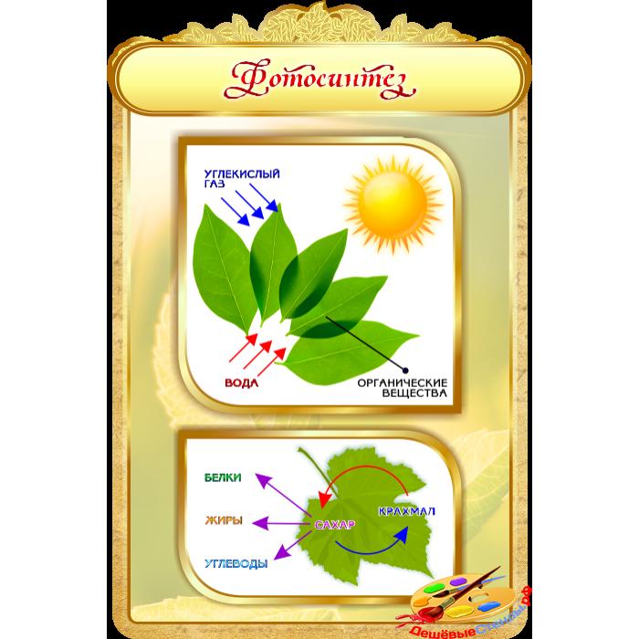 Фотосинтез для кабинета Биологии в золотистых тонах
