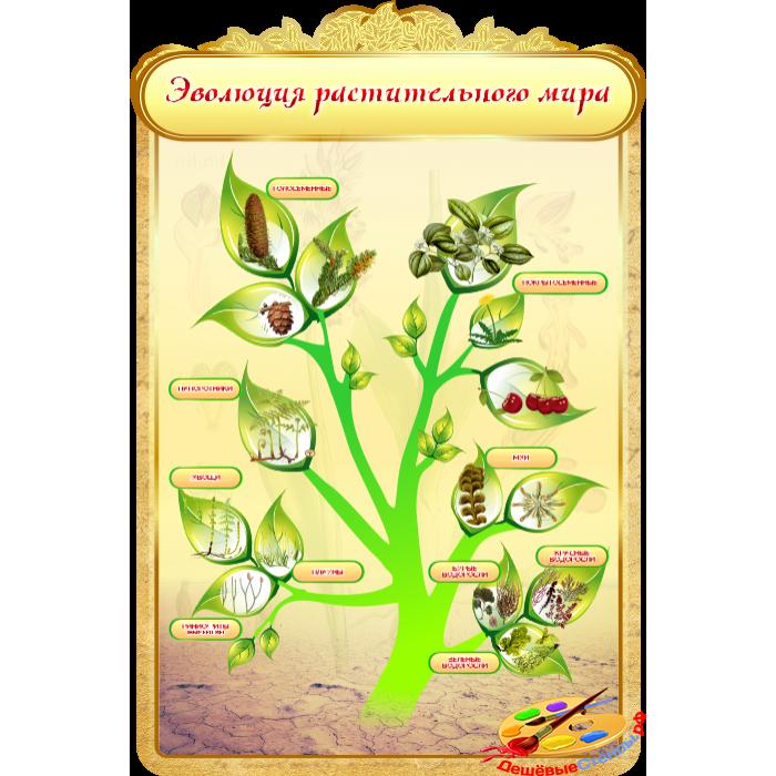 Эволюция растительного мира для кабинета Биологии в золотистых тонах